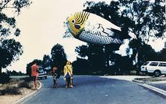 blimpup81 (deadbudgie) Tags: blimp giant budgie la trobe 1981 melbourne sculpture triennial dot thompson outdoor installation event