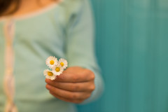 Flowers and compassion (Nathalie Le Bris) Tags: azul blau bleu blue fleur flor flower main pâquerette turquoise compassion love hand mano daisy