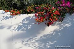 Shadows II (nina.polareuth) Tags: parquenaturalcabodegataníjar lasnegras