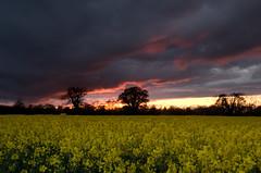 Wymondham Sunset (Jacob Kenworthy) Tags: landscapes landscape sunset wymondham nature norfolk nikon d7000 18105mm cokinnd cokin filters