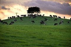 10,000 to 1 (PentlandPirate of the North) Tags: cheshire a34 monksheath cows field silhouette hill