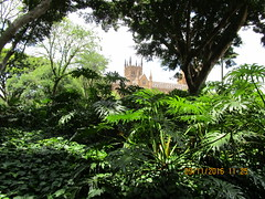 Almost summer (RubyGoes) Tags: hydepark syd nsw australia plants trees green philodendron stmaryscathedral city sky ficus tree