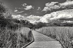 Walk this way, Leighton Moss, UK (Paul_Dean) Tags: leightonmoss uk rspb blackandwhite