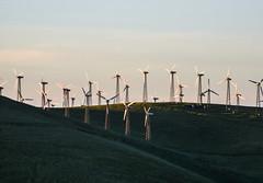 redmond ridge turbines (pbo31) Tags: eastbay alamedacounty bayarea may 2017 spring boury pbo31 color nikon d810 country altamont sunset turbine wind power energy altamontpass