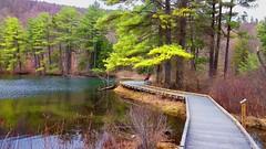 Pleasant Valley Audubon Wildlife Sanctuary (Brooks Payne) Tags: brooks brooksbos nature massachusetts berkshires mountains water pond reflections newengland moto g4 motorola