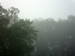 Fog And Trees.