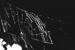 spider web (marennl) Tags: spider insect web dark shade light lights canon canoneos400d canon400d bw blackandwhite