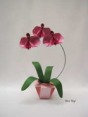 A commission for Mother's Day (Yara Yagi) Tags: origami paper papel flor flower orquídea orchid