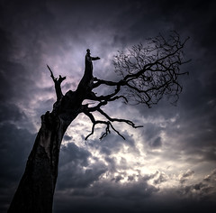 Say A Little Prayer (RonnieLMills) Tags: lone tree rihanna silhouette dark clouds figure little prayer bangor county down northern ireland