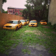 Where the feral taxis bloom (ranjit) Tags: nyc grass brooklyn square taxi hill lot taxis squareformat vacant mayfair boerum faketiltshift iphoneography instagramapp