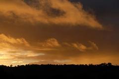 NW from Numulgi (dustaway) Tags: sunset orange colour silhouette skyline clouds nuvole nubes cumulus nsw showers nuages cloudscape sunsetclouds stratus sunsetsky burningclouds couchersdesoleil northernrivers sunlitclouds cloudshots numulgi cloudsstormssunsetssunrises