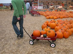 Hauling Gourds (smenjas) Tags: autumn people fall me country ag opp
