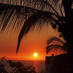 Bahia de Banderas coconut sunset (uteart) Tags: sunset palms mexico day coconut clear bahiadebanderas puertovallarta amapas utehagen uteart projectweather blinkagain olympusomdem5 copyrightutehagen2013allrightsreserved