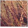 041 (imagepoetry) Tags: autumn season spider dewdrops drops web olympus dew tau waterdrops netz wassertropfen spinnennetz spinnen imagepoetry xz1