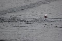 IMG_3972 (koval_volkovalexey) Tags: фото photo rc racing model boat world championship 2013 belgium gent sports photographer by alex kovalvolkov alexey akv