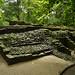 Rovine ancora sepolte dalla vegetazione