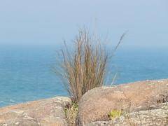 IMG_5889 (Nelson Luiz Wendel) Tags: brazil praia brasil mar rainforest natureza florianpolis paisagem santacatarina litoral oceanoatlntico ecoturismo guardadoemba amricadosul palhoa restinga rochas parqueestadual mataatlntica embau serradotabuleiro regenwaldt
