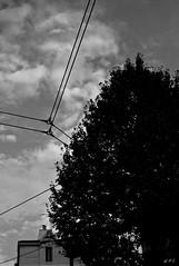 leica-m8--1003120.jpg (A.Pi81) Tags: street leica blackandwhite bw white black art 35mm photography photo marseille europe noiretblanc photos m8 rue arbre blackdiamond summarit leicam8 photodarbre photorue