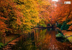 nature water autumn trees romance beauty hd wallpaper