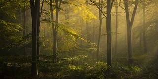 Edenhall Woods