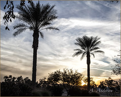 Palms No. 1 (A Anderson Photography, over 1 million views) Tags: travel trees canon palms palmtrees nikcolorefexpro