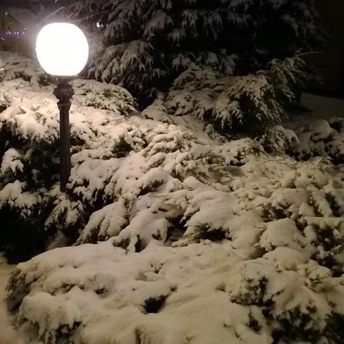 #зима #снег #фонарь #хвойные