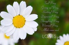 Pray (gLySuNfLoWeR) Tags: nature sad muslim islam faith pray daisy loves allah hurting