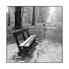 frozen 2 • dijon, burgundy • 2013 (lem's) Tags: trees winter frozen alley frost dijon burgundy hiver hasselblad arbres benches bourgogne parc gel parl gelé allée 500cm bancs colombiere givré