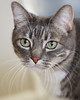 WHISKERS (WisteriaLane) Tags: cats catportraits beautifulcats