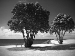 Coastared (Monkey Mooncalf) Tags: new newzealand blackandwhite bw plymouth infrared fauxinfrared richieisaacs