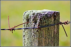 Fence Post (Rubio-Martinez) Tags: wood summer fence wire iron post pentax farm steel rusty farmland lichen kx pentaxkx pentaxkmount pentaxart