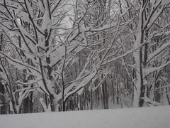 P1120390 (prelude2000) Tags: winter snow japan aomori hakkoda      sukayu