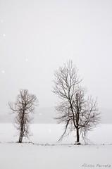 IMG_1774 (stars & rockets) Tags: winter snow newyork seasons artistic snowstorm creative january freezing snowing nyack mothernature
