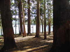 Munnar, Kerala (anurag.tiwari.8) Tags: dam kerala munnar kundala