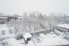 White out (Mpov81) Tags: winter white snow sticky
