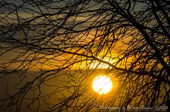Today was a sunny day (Maryus B.) Tags: trees sunset sky sun clouds spring nikon dusk sunny romania clearsky sunnyday apus soare copaci apusdesoare ilfov ziinsorita popestileordeni nikond5100