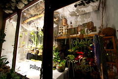 Pollon, The Florists