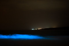 Olas Fosforescentes (natalielafuente) Tags: ocean chile mar pregnant pajaros estrellas olas pacifico ola oceano sudamerica nocturno embarazo plancton antofagasta fosforescente fosforescentes