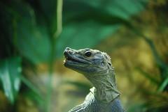 DSC_0174 (Silvana Maresca) Tags: roma zoo animali rettile