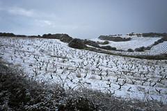 Neve a Badde Nigolosu - Snow in Badde Nigolosu