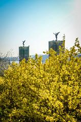 Engel von Prag (www.altstadthotels.net) Tags: prag blumen gelb engel brcke altstadt morgen blten moldau morgenstimmung