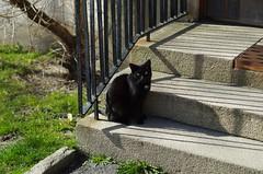 cat (rotabaga) Tags: gteborg pentax sweden gothenburg sverige k5 guldheden