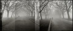 Fog (noble.mare.milker) Tags: blackandwhite bw london 120 film analog mediumformat kodak trix rangefinder diafine analogue 6x7 80mm plaubel makina plaubelmakina 80mmf28 plaubelmakina670