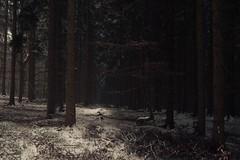 Winter Forest (Netsrak) Tags: atmosphäre baum bäume eifel februar forst landschaft natur nebel schnebel schnee stimmung wald atmosphere fog forest landscape mist mood nature snow tree trees woods meckenheim nordrheinwestfalen deutschland de
