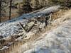 Kootenay Plains Alberta (kevinmklerks) Tags: alberta rocky mountains kootenay kootney plains lake abraham falls forest floodplain siffleur