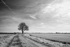 The Tree (Herman1705) Tags: hensbroek obdam heerhugowaard wogmeer boom tree ennamünchen lithagon 28mm a500 fullspectrum lente spring silverefexpro nik infrared ir