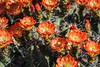 DSC_2566.jpg (RiverBum - MN) Tags: estrella whitetank grandcanyon phoenix springbreak arizona