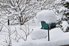 Merry Christmas ... Oops, Sorry. April Fool! :-) (Zircon_215) Tags: snow april1st springtime newfoundland westernnewfoundland birdfeeder birdbath redbreastednuthatch chickadee
