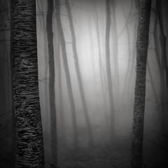 Light in the forest VIII (ilias varelas) Tags: fog forest field blackandwhite bw nature mood mono monochrome mist greece ilias light landscape land dark mystery atmosphere varelas trees shadows