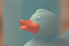 Rubber duck (sonia.sanre) Tags: orange blue orangeandblue macro macromondays azul naranja pato de goma patodegoma duck rubber rubberduck